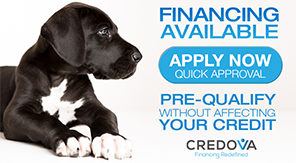Financing - Over The Top French Bulldogs